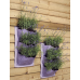Riippuva puutarha - laventeli